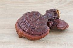 Champignon de Ganoderma Lucidum sur le fond en bois Image libre de droits