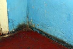 Champignon De Moule Dangereux à La Maison Images Libres De Droits