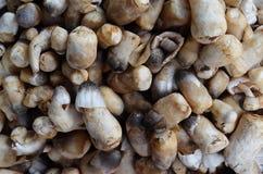 Champignon de paille frais Images stock