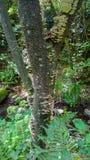 Champignon de parenthèse de l'artiste s'élevant sur le tronc d'un arbre Photo stock