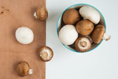 Champignon de paris Photos stock