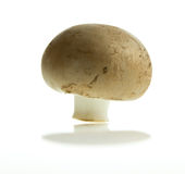 Champignon de paris de Brown Photographie stock libre de droits