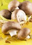 Champignon de champignon de paris en feuilles photographie stock libre de droits