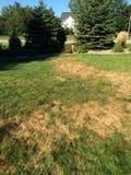 Champignon de pelouse photo libre de droits