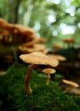 Champignon de région boisée Photographie stock
