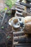 Champignon de Sajor-caju à la ferme de champignon, Thaïlande photos libres de droits