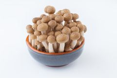 Champignon de Shimeji sur le blanc photo stock
