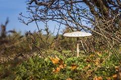 Champignon en automne de forêt images libres de droits