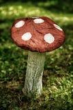 Champignon en bois sur la pelouse Images stock