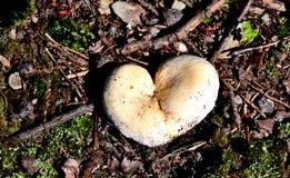 Champignon en forme de coeur Photos libres de droits
