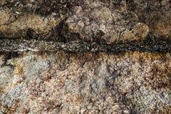 Champignon en pierre et foncé Photographie stock