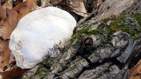 Champignon et écorce 2 Image libre de droits