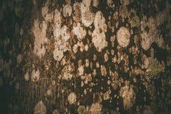Champignon extérieur sur les modèles abstraits en bois Images stock