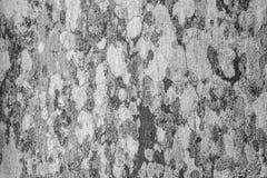 Champignon extérieur sur les modèles abstraits en bois Photographie stock libre de droits