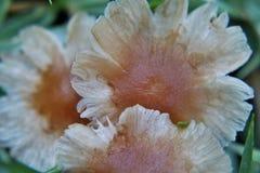 Champignon formé par fleur Photographie stock libre de droits