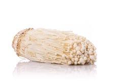 Champignon frais blanc d'enoki Projectile de studio d'isolement sur le blanc images stock