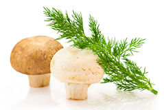 Champignon and green dill Royalty Free Stock Photos