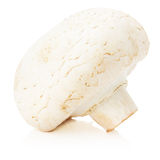 Champignon lokalisiert auf dem weißen Hintergrund Stockfotos