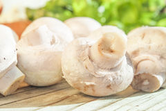 Champignon Royalty Free Stock Photo