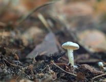 Champignon micro dans la forêt Photographie stock