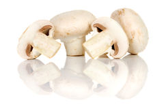 Champignon mushroom Royalty Free Stock Photos