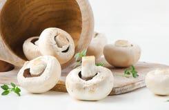 Champignon mushroom Stock Image