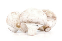 Champignon mushroom. Three champignon mushroom on white background Stock Photos