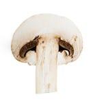 Champignon mushroom Stock Images
