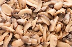 Champignon mushroom background pattern Stock Photos