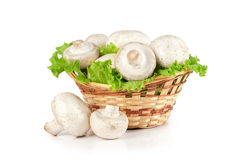 Champignon mushroom in a basket Royalty Free Stock Photos