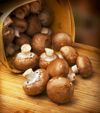 Champignon mushroom, brown variety Stock Photography