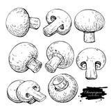 Champignon mushroom hand drawn vector illustration set. Sketch f Stock Photos
