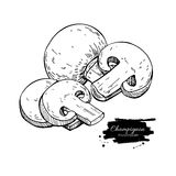 Champignon mushroom hand drawn vector illustration. Sketch food Stock Image