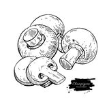Champignon mushroom hand drawn vector illustration. Sketch food Royalty Free Stock Photo