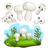 Champignon mushroom isolated, vector illustration Royalty Free Stock Images
