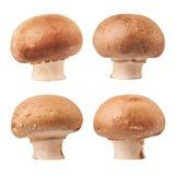 Champignon Mushroom Stock Photography
