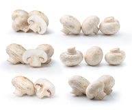 Champignon mushroom  isolated on white background Royalty Free Stock Photography