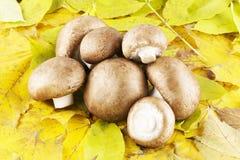 Champignon, mushroom  Stock Image