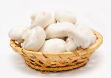 Champignon mushroom white agaricus in the basket Royalty Free Stock Photo