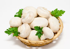 Champignon mushroom white agaricus in the basket Stock Photos