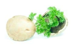 Champignon mushroom white agaricus with parsley Royalty Free Stock Image