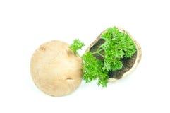 Champignon mushroom white agaricus with parsley Royalty Free Stock Photo