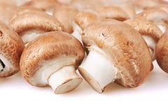 Champignon Mushroom Royalty Free Stock Images