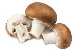 Champignon mushroom  on white background Stock Photos