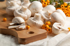 Champignon mushrooms Royalty Free Stock Image