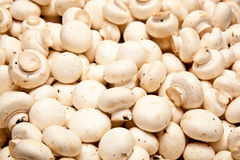 Champignon mushrooms Stock Photo
