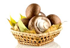 champignon mushrooms in a basket , on white background Stock Images