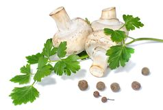 Champignon mushrooms with branch parsley and allspice. On white background stock images