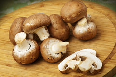 Champignon mushrooms with brown variety Royalty Free Stock Photos