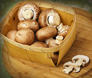 Champignon mushrooms with brown variety Stock Images